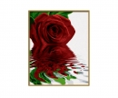 schipper Red Rose