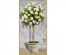 schipper White Rose Tree