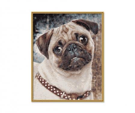 schipper The Pug