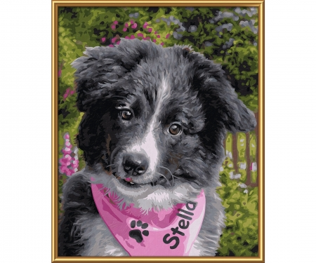 MNZ - Border Collie Puppy