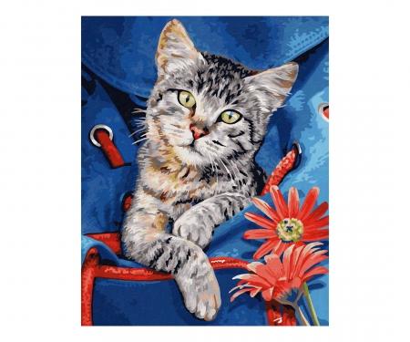 schipper Cat in a backpack