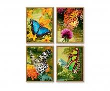 schipper Schmetterlinge Malen nach Zahlen