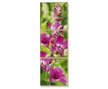 schipper Orchid stem